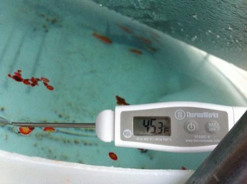 Fish in the tank below