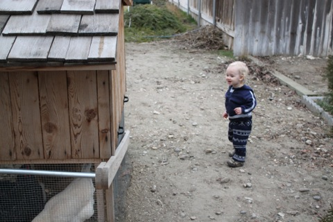 Malachi with the chickens, photo by Hannah
