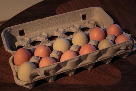 A dozen brown and grey-green eggs