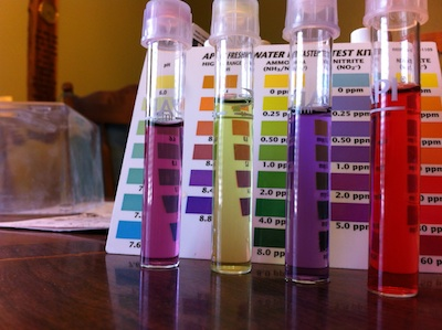Colored water samples in test tubes
